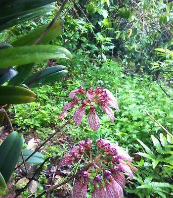 Jungle View Homestay photos Room