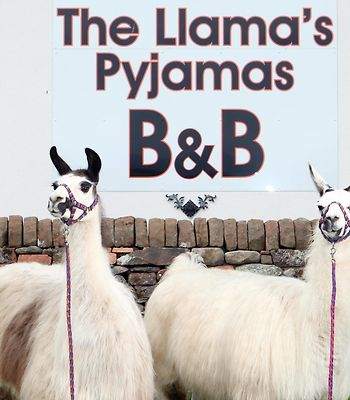 Llamas Pyjamas photos Exterior