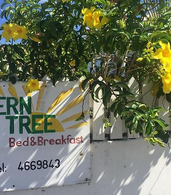 Fern Tree Bed And Breakfast photos Exterior Hotel information
