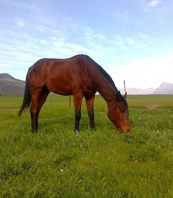 Paarl Diamant Equestrian And Guest Farm photos Exterior Hotel information