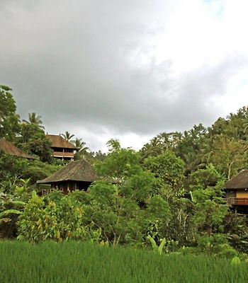Bali Eco Stay photos Exterior