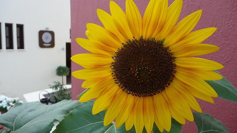 Helianthus Guesthouse Exterior Hotel information